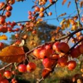 Autumn & Winter in your organic garden