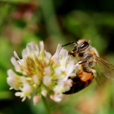 Bees found to acquire a taste for pesticides