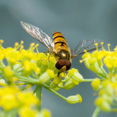 organic garden insects