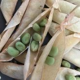 Next steps in seed saving course