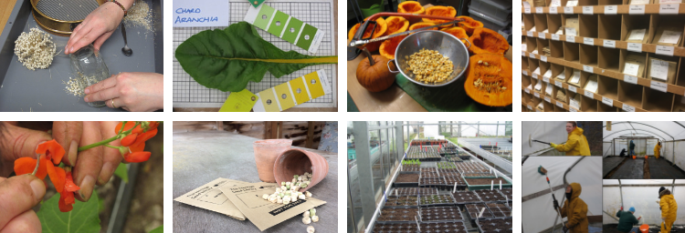 A year at the Heritage Seed Library