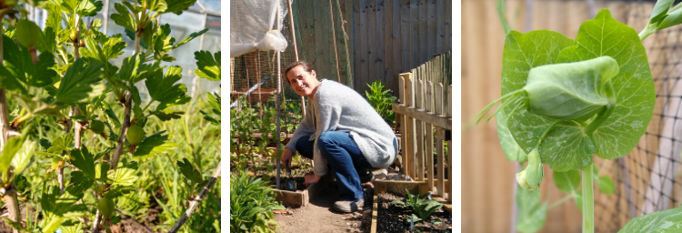 On the Allotment blog5