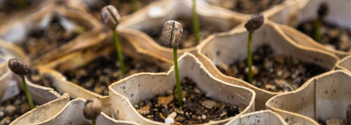 Six Steps To Successful Seed Sowing Www Gardenorganic Org Uk